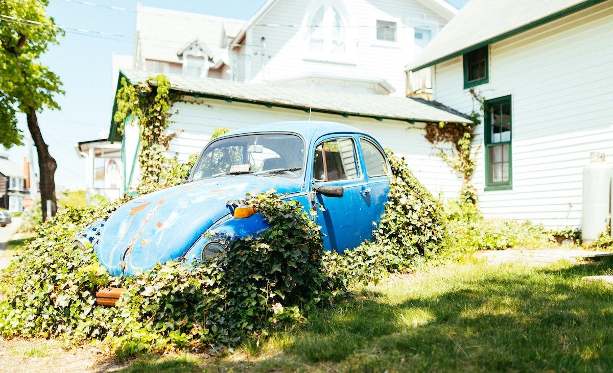 rusted beetle